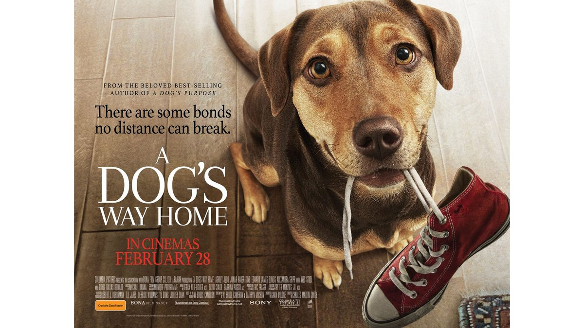 Grab a family pass to A DOG'S WAY HOME, in cinemas 28 February